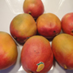 Charlotte-a-la-mangue-Les mangues