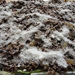 Grattin-de-courgettes-Parmesan