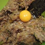Brochettes-viande-Ajouter un oeuf