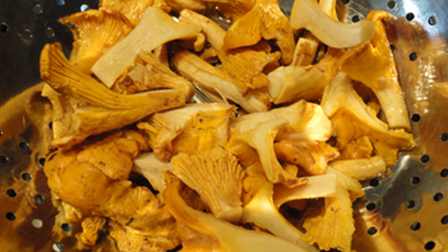 Chanterelle Mushrooms!