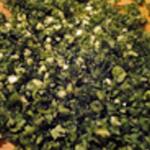 Beurre-escargot-Hacher persli et ail