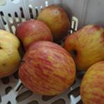 Aumônière de pomme Eplucher les pommes