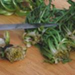 Salade de pissenlits Supprimer les mauvaise feuilles