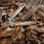 Rillettes de porc Désosser la viande