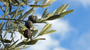 02-Les-olives