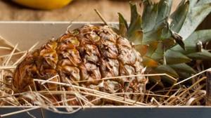 Recette de Rhum ananas