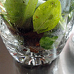 Verrine avocat Zoom