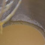 Mascarpone au citron Blanchir les jaunes et le sucre