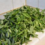 Pesto basilic et parmesan Sécher le basilic