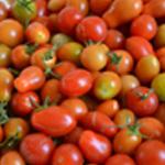 Salade tomates cerise Les tomates cerises