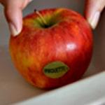 Pomme au four Choisir une belle pomme