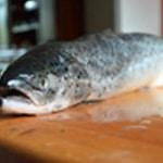 Saumon au four Rincer le saumon