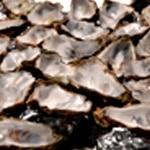 Huitre fondue de poireaux Ranger les coquilles