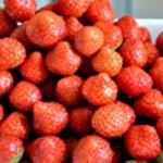 Pana cotta fraises Rincer les fraises