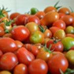 Tomates cerise et romarin Sécher les tomates