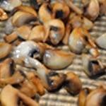 Sauce aux champignons Saisir les champignons de Paris
