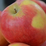 Compote de pommes ramassées en bocaux Pommes