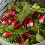 Beurre de radis Laver les radis avec les fanes