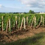 Vignobles Chantonnet La vigne